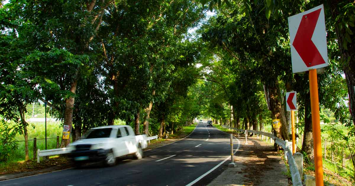 SAVE THE TREES. The national highway that traverses the VSU main campus is lined with trees with thick foliage.